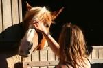 b_0_100_16777215_00_images_photos_loisirs_fil-ado_cheval-3.jpg